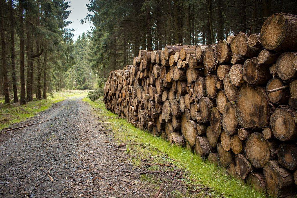 Settore forestale: trasporto tronchi