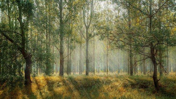 marchesigru-greandeal-firmamanifesto-greeneconomy